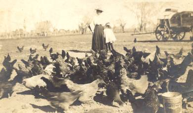 Unknown tending the chickens in Gurley Alabama